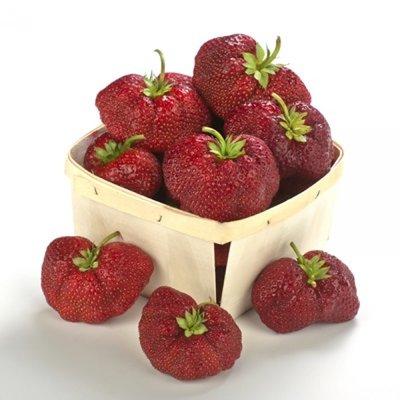 Malwina Strawberry Late Season 25 count bundle